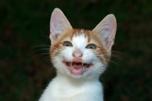 http://www.dreamstime.com/royalty-free-stock-photos-smiling-cat-image22383398